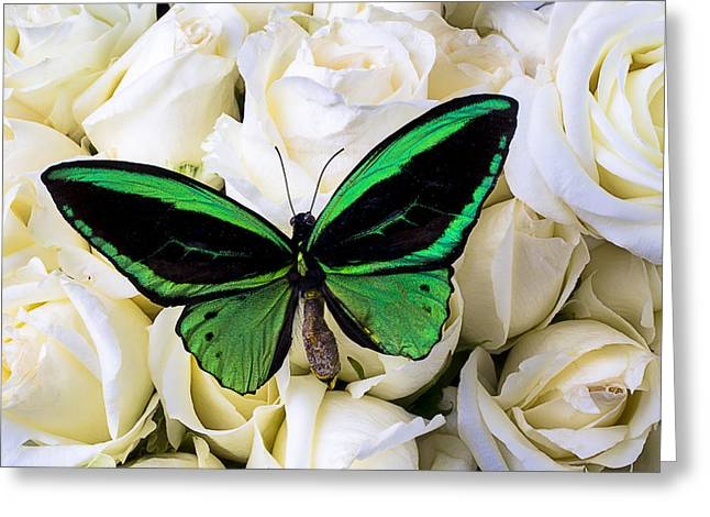 Vibrant Green Greeting Cards - Green Butterfly On White Roses Greeting Card by Garry Gay