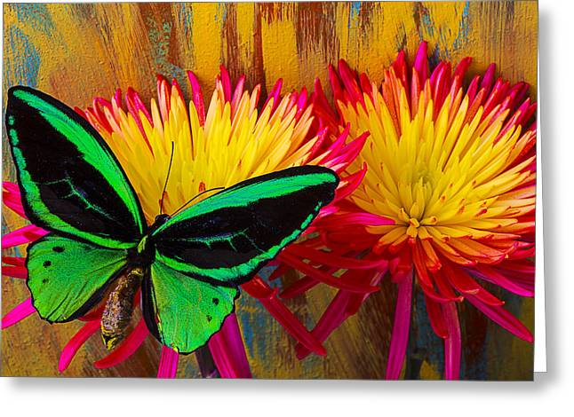 Antenna Greeting Cards - Green Butterfly Resting On Mum Greeting Card by Garry Gay