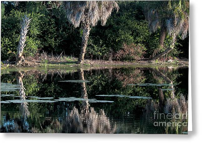 Green Cay Greeting Cards - Green Cay Wetlands, Florida Greeting Card by Mark Newman