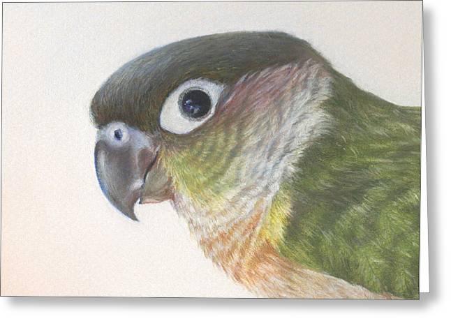Talking Pastels Greeting Cards - Green Conure Greeting Card by Natasha Denger