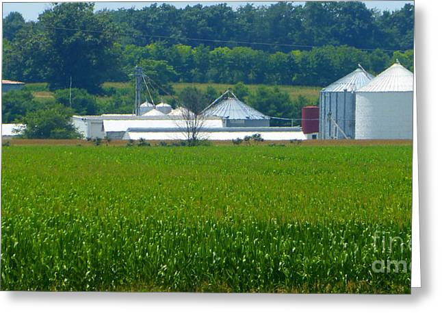 Rural Indiana Greeting Cards - Green Cornfield White Silos Greeting Card by Tina M Wenger