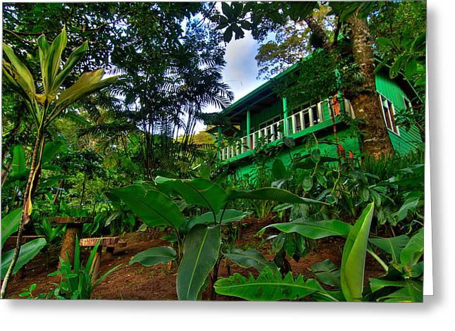 Zoology Greeting Cards - Green Costa Rica Paradise Greeting Card by Andres Leon