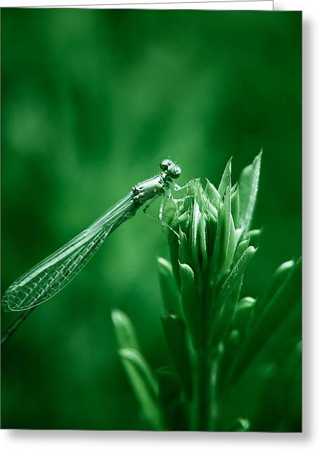 Damselfly Greeting Cards - Green Damselfly Greeting Card by Shane Holsclaw