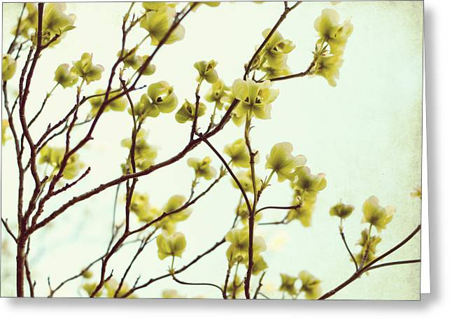 Green Dogwood Greeting Card by Lupen  Grainne