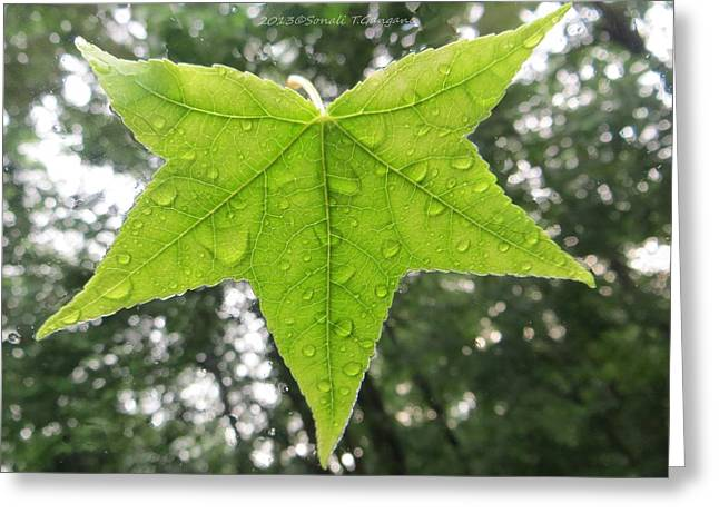 Empower Greeting Cards - Green droplets Greeting Card by Sonali Gangane