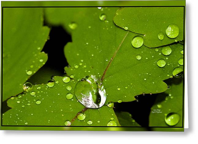Raindrops On Leaves Greeting Cards - Green Drops Greeting Card by Crystal Wightman