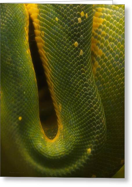 Coldblooded Greeting Cards - Green Emerald Boa Greeting Card by Thomas Woolworth