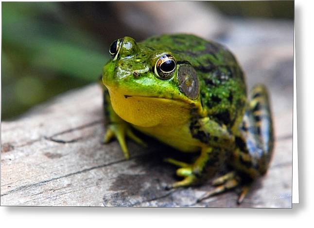 Green Frog Greeting Cards - Green Envy Greeting Card by Christina Rollo