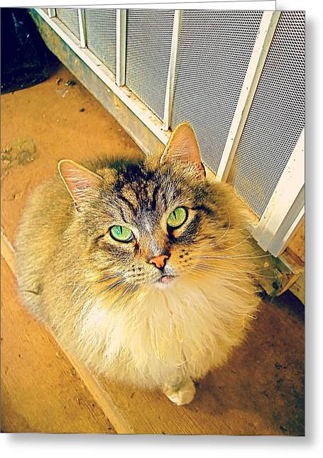 Screen Doors Greeting Cards - Green-Eyed Cat Greeting Card by Nathanael Sims