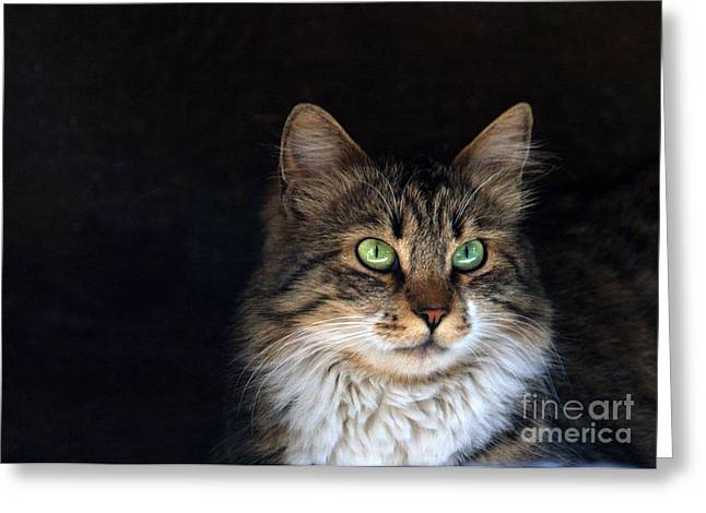 green eyes Greeting Card by Stylianos Kleanthous