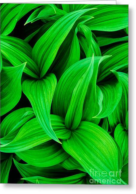 Color Green Greeting Cards - Green False Hellebore Greeting Card by Inge Johnsson