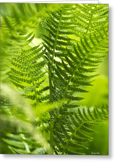 Green Fern Art Greeting Card by Christina Rollo