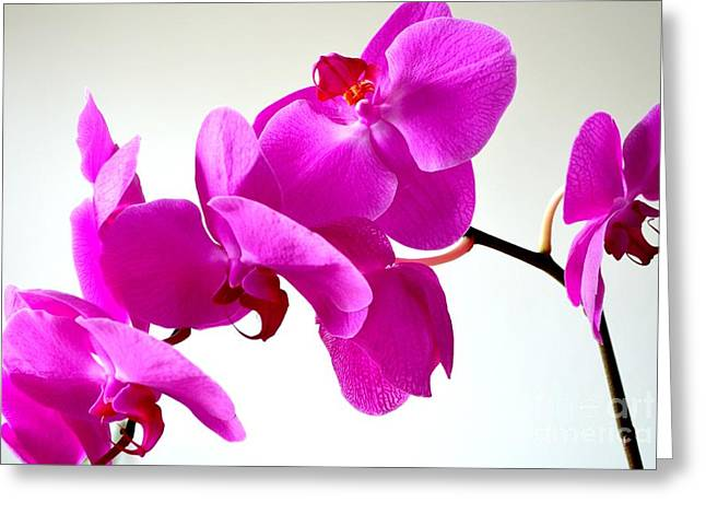 Lauhala Greeting Cards - Green Field Sweetheart Orchid No 1 Greeting Card by Mary Deal