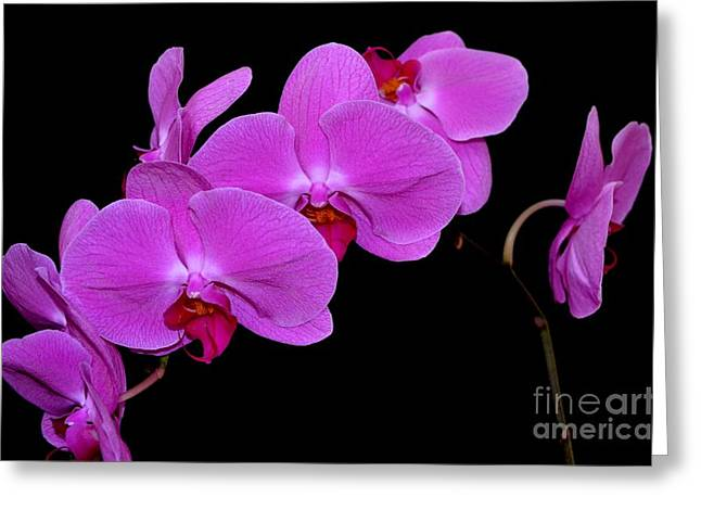 Lauhala Greeting Cards - Green Field Sweetheart Orchid No 2 Greeting Card by Mary Deal