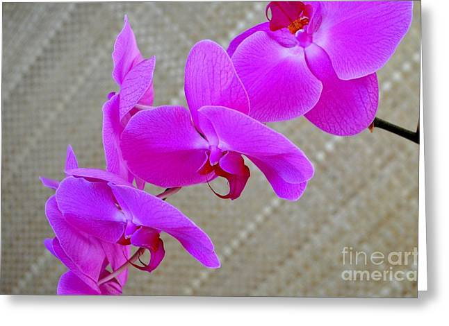 Lauhala Greeting Cards - Green Field Sweetheart Orchid No 3 Greeting Card by Mary Deal