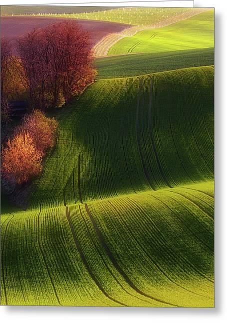 Green Fields Greeting Card by Piotr Krol (bax)