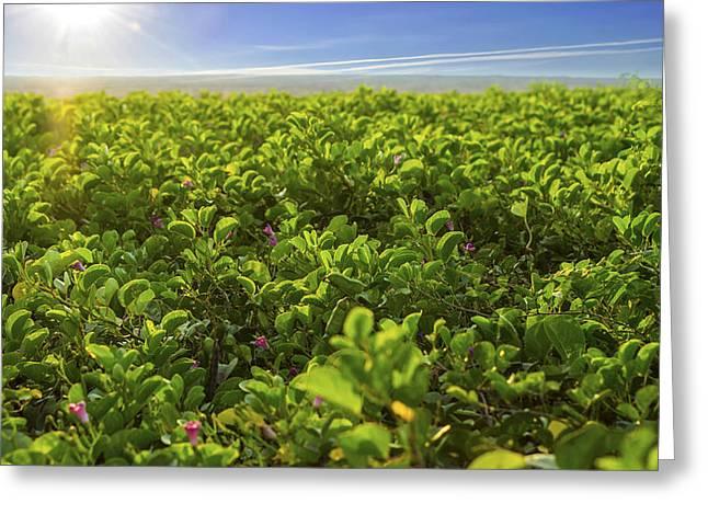 Lawns Fields Greeting Cards - Green Flower bed Greeting Card by Aged Pixel
