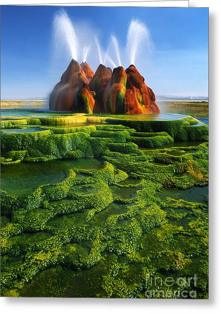 Geothermal Greeting Cards - Green Fly Geyser Greeting Card by Inge Johnsson
