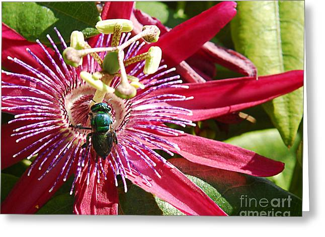 Goals Pyrography Greeting Cards - Green Fly on Passion Flower Greeting Card by Maria Martinez