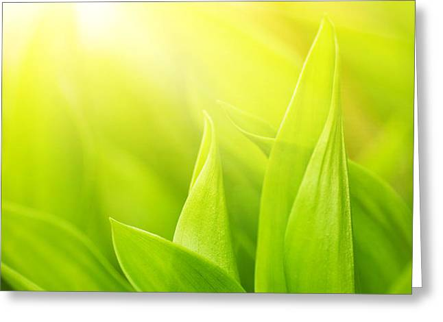 Green foliage Greeting Card by Boon Mee