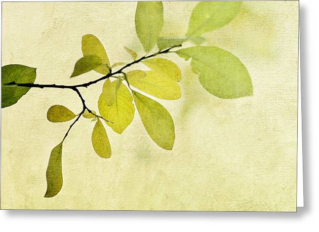 Foliage Photographs Greeting Cards - Green Foliage Series Greeting Card by Priska Wettstein