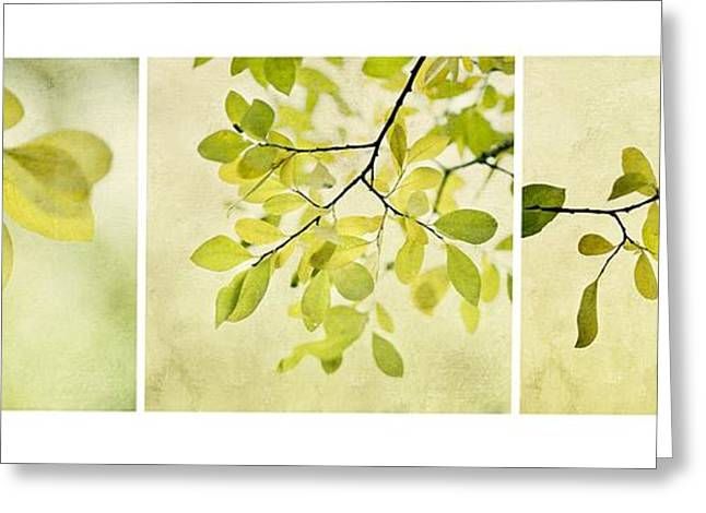 Botany Greeting Cards - Green foliage triptychon Greeting Card by Priska Wettstein