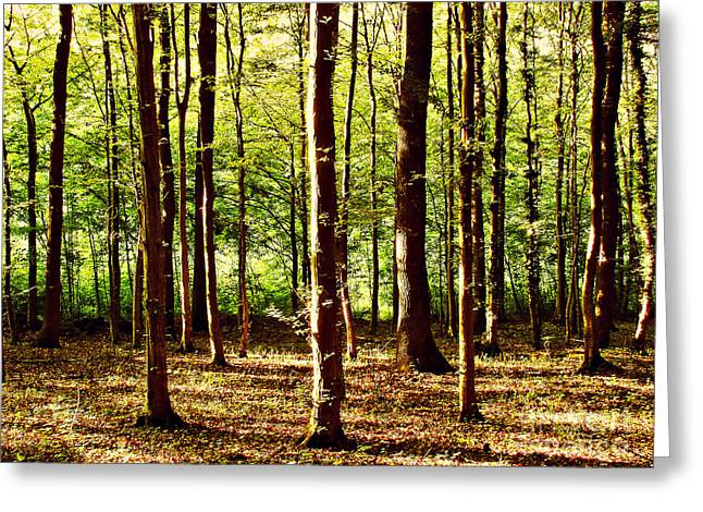 Mystical Landscape Greeting Cards - Green forest Greeting Card by Dan Radi