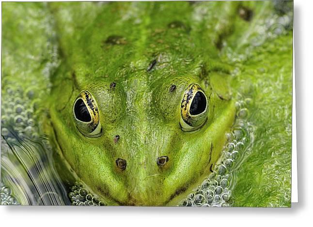 Green Frog Greeting Card by Matthias Hauser
