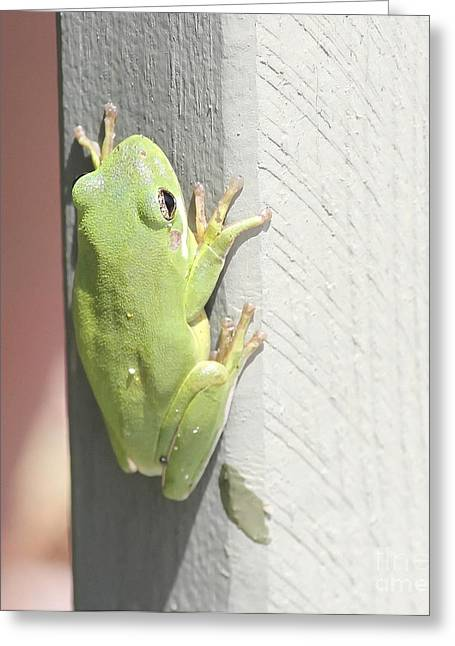Green Froggy Greeting Card by Cathy Lindsey