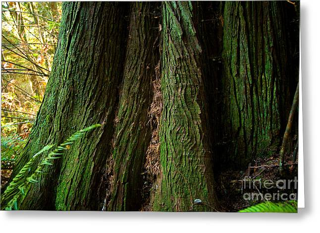 Red Cedar Greeting Cards - Green Giant Greeting Card by Terry Elniski