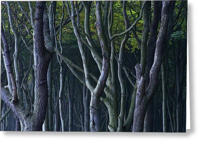 Abstract Nature Greeting Cards - Green Glow Greeting Card by Heiko Koehrer-Wagner