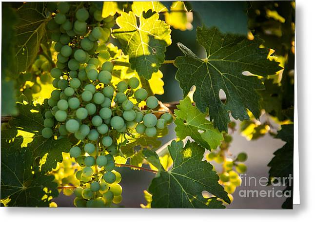 Grape Vineyard Greeting Cards - Green Grapes Greeting Card by Ana V  Ramirez