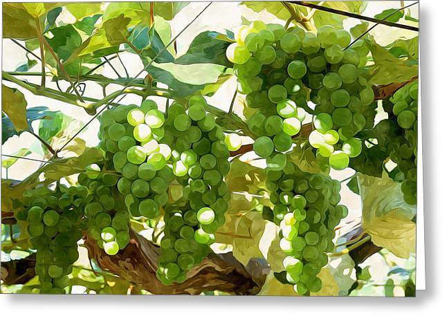Organic Greeting Cards - Green Grapes in organic farm Greeting Card by Lanjee Chee