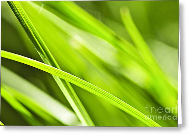 Raindrop Greeting Cards - Green grass abstract Greeting Card by Elena Elisseeva