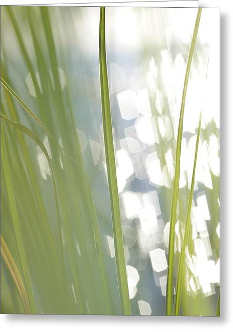 Sensitivity Greeting Cards - Green grass and glittering lake - available for licensing Greeting Card by Intensivelight