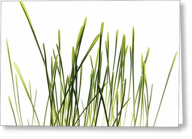 Copy Space Pyrography Greeting Cards - Green Grass Greeting Card by Anna Kaminska