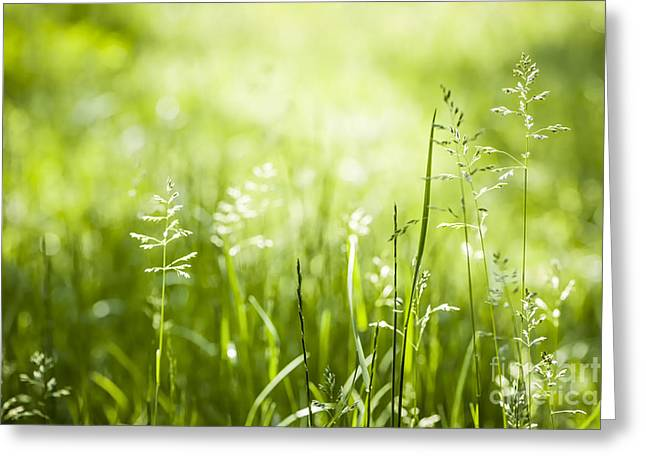 New Life Greeting Cards - Green grass flowering Greeting Card by Elena Elisseeva