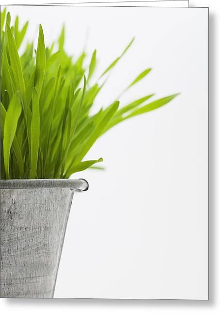 Grow Inside Greeting Cards - Green Grass In A Pot Greeting Card by Steven Raniszewski