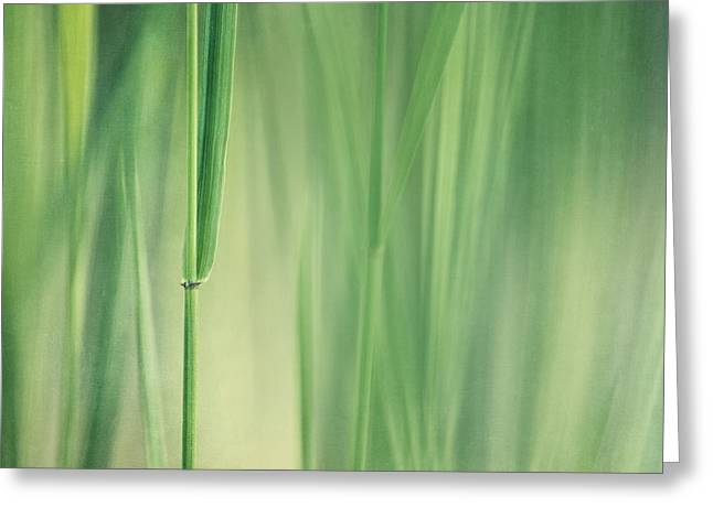 Botany Greeting Cards - Green Grass Greeting Card by Priska Wettstein