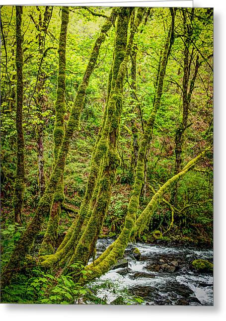 Heart Of Waterfalls Greeting Cards - Green Green Greeting Card by Jon Burch Photography