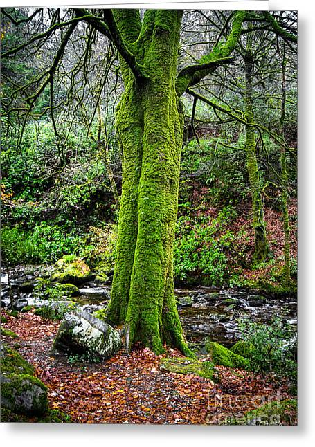 Eerie Greeting Cards - Green Green Moss Greeting Card by Imagery by Charly