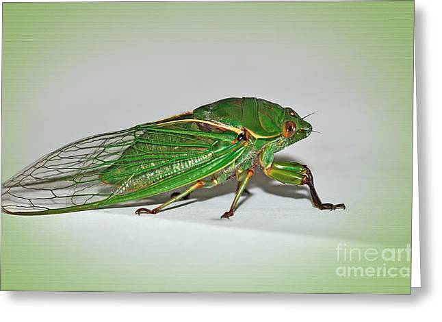 Grocer Greeting Cards - Green Grocer Cicada Greeting Card by Kaye Menner
