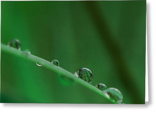Rain Drop Mixed Media Greeting Cards - Green Greeting Card by Heike Hultsch