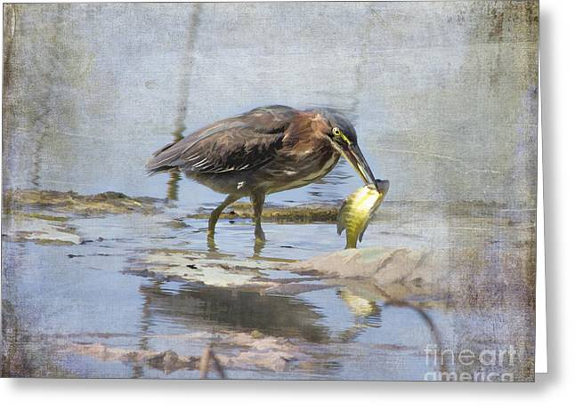 Tn Greeting Cards - Green Heron more than a mouthful Greeting Card by TN Fairey
