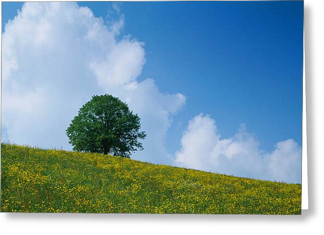 Zug Greeting Cards - Green Hill W Flowers & Tree Canton Zug Greeting Card by Panoramic Images