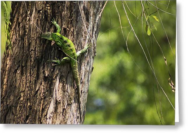 Tropical Wildlife Greeting Cards - Green Iguana Greeting Card by Aged Pixel