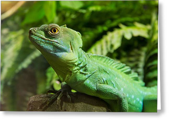Forest Pyrography Greeting Cards - Green Iguana Greeting Card by Andrea Casali