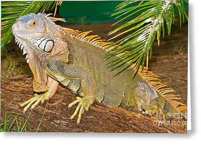 The Trees Greeting Cards - Green Iguana Greeting Card by Millard H. Sharp