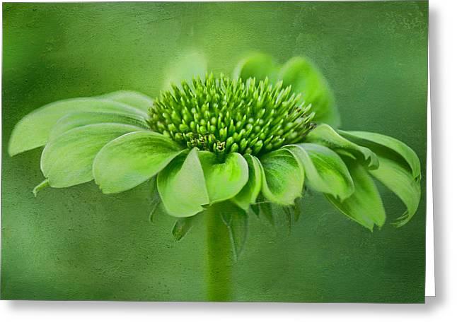 Envy Greeting Cards - Green Jewel - Cone Flower - Echinacea #2 Greeting Card by Nikolyn McDonald