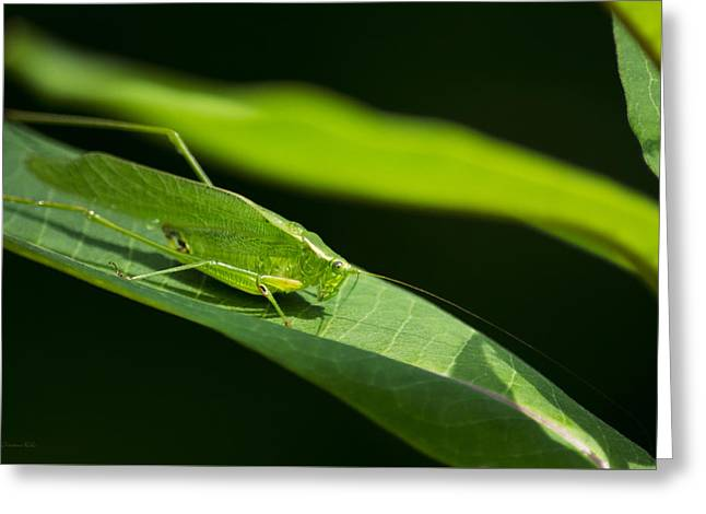 Katydid Greeting Cards - Green Katydid Greeting Card by Christina Rollo